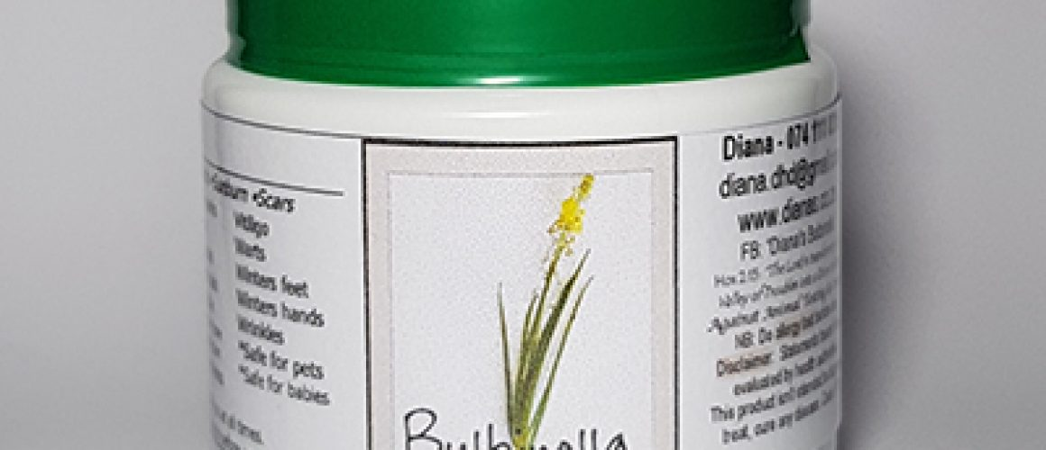Bulbinella-Cream - Copy